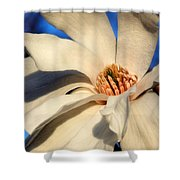 White Saucer Magnolia Shower Curtain