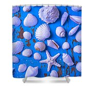 White Sea Shells On Blue Board Shower Curtain