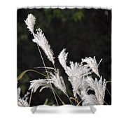 White Seed Shower Curtain