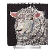 White Sheep Shower Curtain