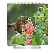 White-sided Flowerpiercer Shower Curtain