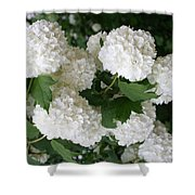 White Snowball Bush Shower Curtain