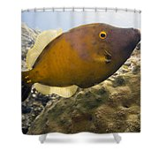 White Spotted Filefish Shower Curtain