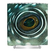 White-spotted Pufferfish Eye Shower Curtain