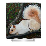 White Squirrel Of Sooke Shower Curtain