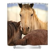 White Stallion Wild Horses On Navajo Indian Reservation  Shower Curtain