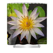 White Star Lotus Shower Curtain