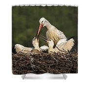 White Stork Shower Curtain