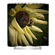 White Sunflower And Bee Shower Curtain