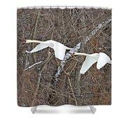 White Swans In Flight 1589 Shower Curtain