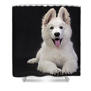 White Swiss Shepherd Dog Shower Curtain