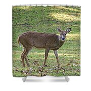 White Tail Deer Shower Curtain