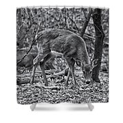 White-tail Deer Shower Curtain