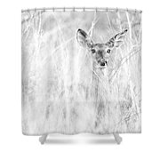 White-tail Doe High Key Shower Curtain