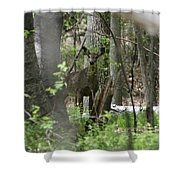White Tailed Deer Encounter  Shower Curtain
