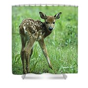White-tailed Deer Fawn Meadow Shower Curtain