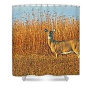 White Tailed Deer In Morning Light Shower Curtain