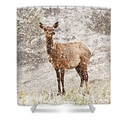 White Tailed Deer In Snow Shower Curtain