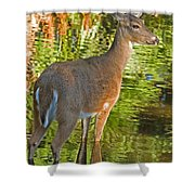 White Tailed Deer Shower Curtain