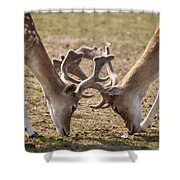 White-tailed Deer Shower Curtain