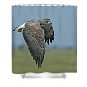 White-tailed Hawk Shower Curtain