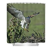 White-tailed Hawk At Nest Shower Curtain
