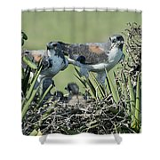 White-tailed Hawk Family Shower Curtain