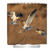 White-tailed Kite Trio Shower Curtain