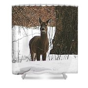 White-tailed Winter Stand  Shower Curtain