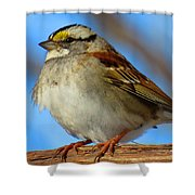 White Throated Sparrow And Blue Sky Shower Curtain