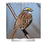 White-throated Sparrow Pictures 108 Shower Curtain