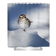 White Throated Sparrow Square Shower Curtain