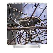 White-throated Sparrow With Berry Shower Curtain
