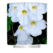 White Thunbergia On The Fence Shower Curtain