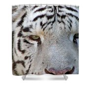 White Tiger - 01 Shower Curtain