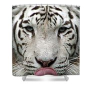 White Tiger - 02 Shower Curtain