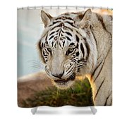 White Tiger At Sunrise Shower Curtain