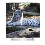 White Tiger Cub Shower Curtain