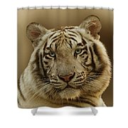 White Tiger II Shower Curtain