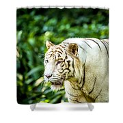White Tiger Portriat Shower Curtain