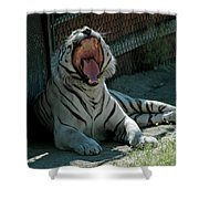 White Tiger Reno Nv 3 Shower Curtain