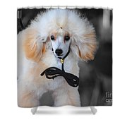 White Toy Poodle Shower Curtain