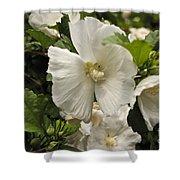White Tree Flower Shower Curtain