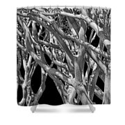 White Tree Limbs Shower Curtain