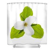 White Trillium Flower  Shower Curtain by Elena Elisseeva