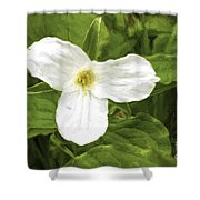 White Trillium Flower Shower Curtain