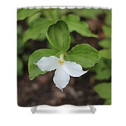 White Trillium Shower Curtain