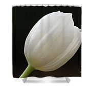 White Tulip 1 Shower Curtain