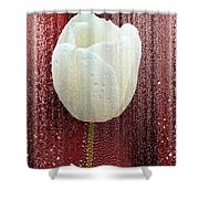 White Tulip On Red Shower Curtain