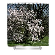 White Tulip Tree Shower Curtain